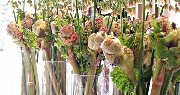 Ken Marten: O multitalentoso florista