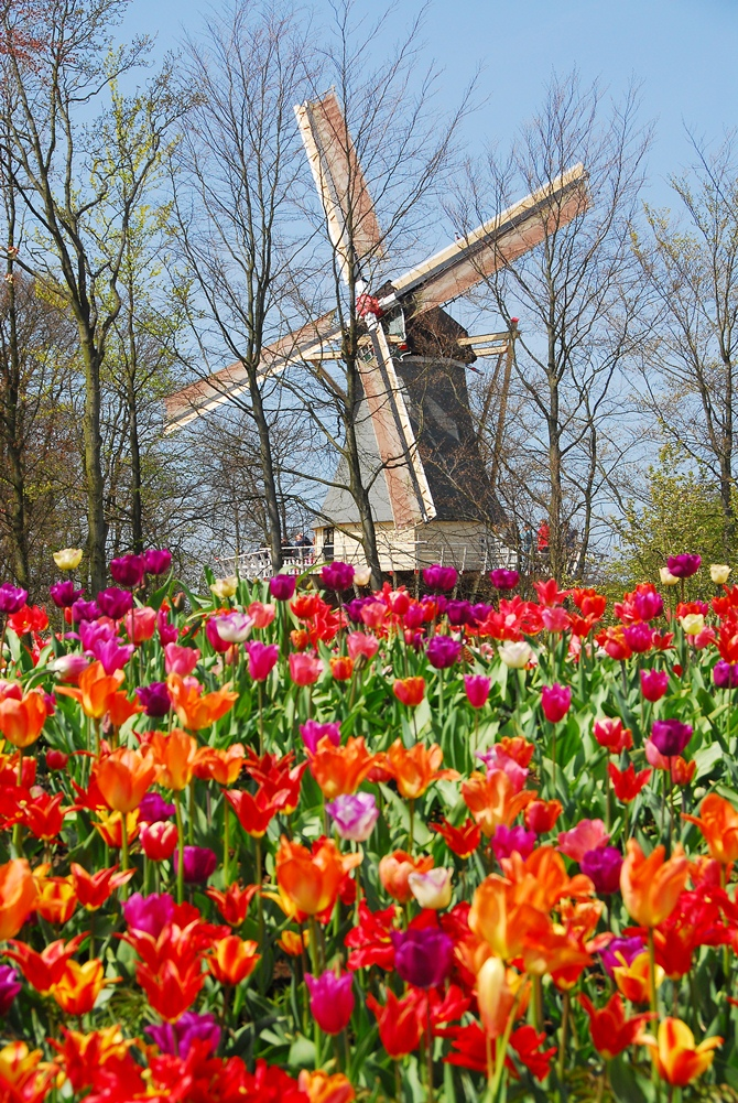 Keukenhof, the most beautiful spring garden in the world